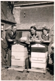 19470400 bijen-min