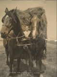Frederik Heldoorn met paard en hooiwagen.