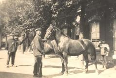 paard-bij-rotman